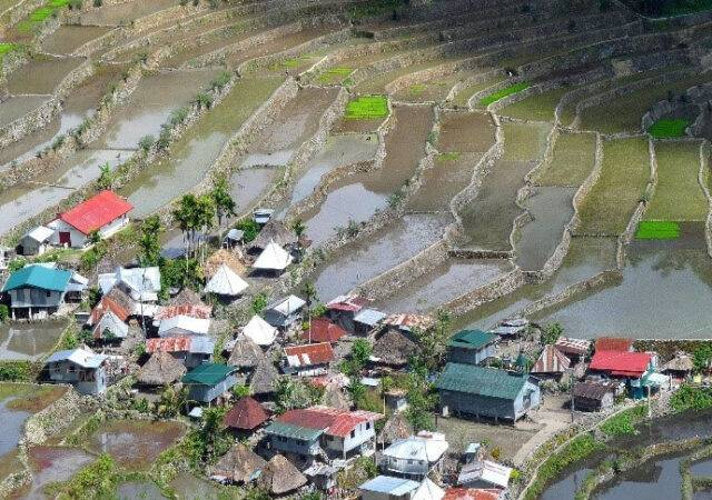 Town with Rice Fields